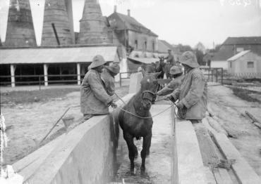 Q557 IWM Public Domain Veterinary Hospital Etaples 1916